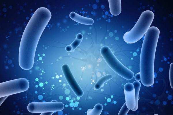 Less Diverse Gut Microbiota in PCOS Linked to Hyperandrogenism