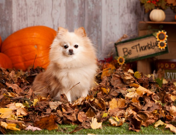 The Many Benefits Of Pumpkin For Your Dog
